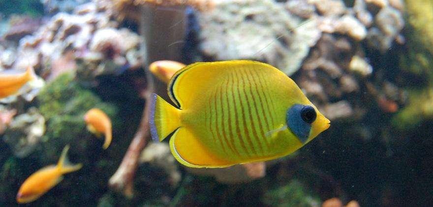 Découvrez l'aquarium et le zoo en famille