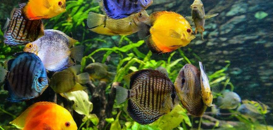 The Porte Dorée tropical aquarium and the Vincennes Zoo